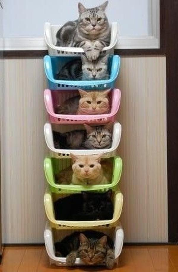 Cats Stacked.jpg